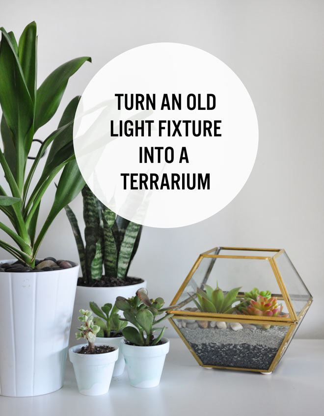 DIY terrarium using an old 1980s light fixture